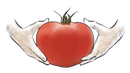 Rotten tomato for Monsanto