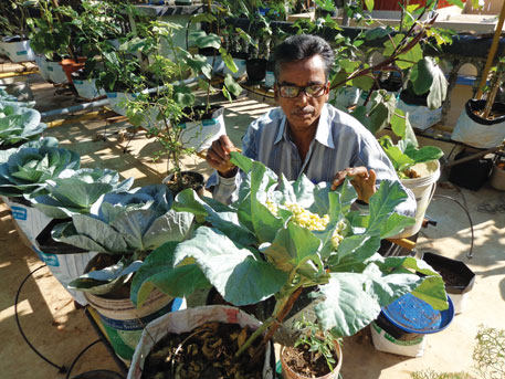 Thiruvananthapuram resident, R Raveendran, who won the Innovative Farmer Award in 2014 from the Indian Agricultural Research Institute for his rooftop farm