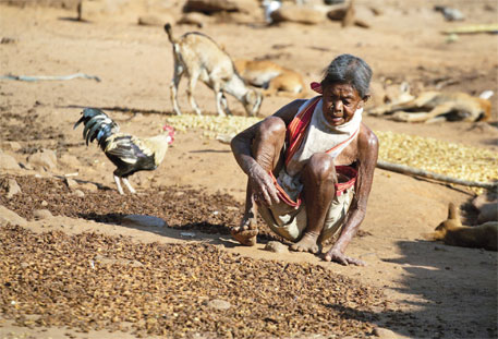 A woman dries mahua flowers