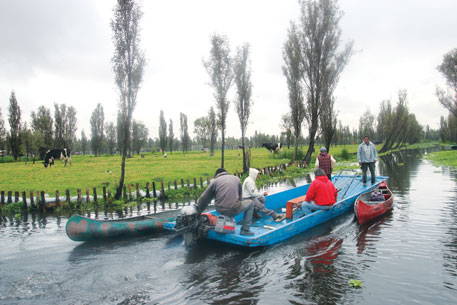 Axolotl is found only in Xochimilco, a network of islands and canals (above). The predator amphibian (left) is now bred in captivity at Mexico's National Autonomous University