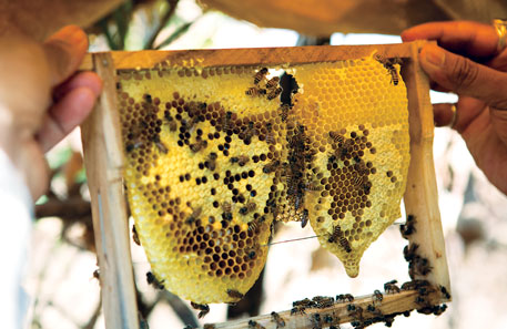 Bee-keeping has become a successful hobby for citizens in London and Toronto