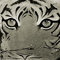 3 tigers found dead in Corbett in a week