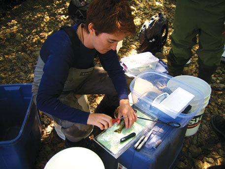Stephanie Carlson, senior author of the study, tags fish in an intermittent stream in California. These streams cease to flow for some part of the year, killing fish in the process