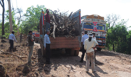 Vedanta guards caught loading illegally felled trees onto a truck