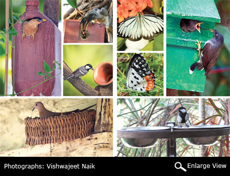 Nectar-rich and bushy flowering plants attract butterflies. Enclosed wooden boxes, plastic bottles, shoe boxes and earthen pots offer excellent space for birds to build nests. Tie them tightly to trees or windows to ensure safety of eggs and chicks