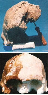 The Narmada fossil is a part of a skull cap; (bottom) its artificial reconstruction