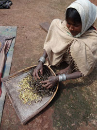 Tribal people say bewar and penda grains can be stored for years without spoiling and that the surpluses in good years gives them a safety net for the lean ones