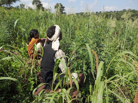 Include millets in PDS for food and nutritional security, demand scientists