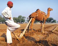 Rajasthan opens farm gates
