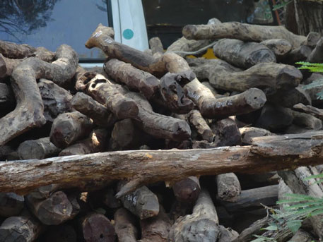 Politicians, activists condemn killing of alleged sandalwood smugglers in Andhra