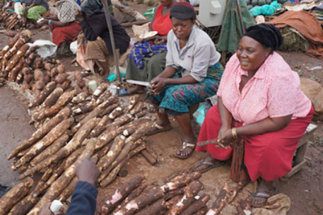 'Africa's cassava production not keeping pace with population growth'