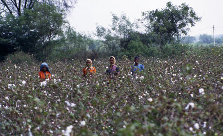 Government rolls back ban on cotton exports