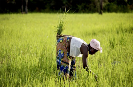 GM or organic: The choice before African nations