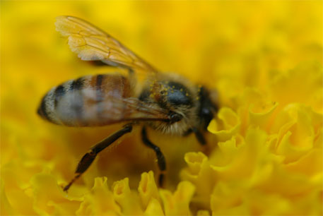 US environmental body proposes temporary pesticide-free zones to protect honeybees