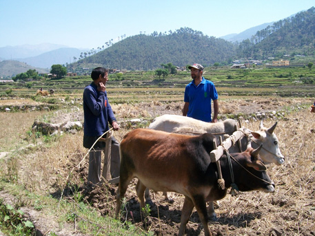 Those who have sufficient land are making good profits. A farmer in Rawain Valley shares his experience of growing vegetables with the author of the article