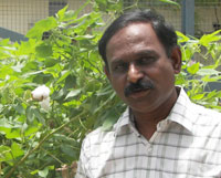 Pesticide use is increasing in Bt cotton, says Keshav Kranthi, director of CICR