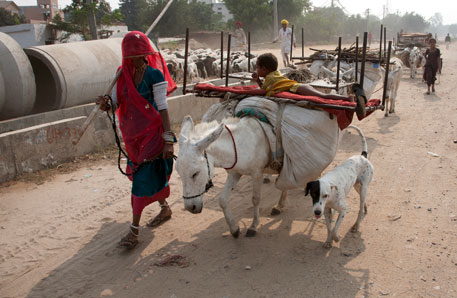 A family in Rajasthan migrating to Kotpulti town in search of living (Photo : Vikas Choudhary)