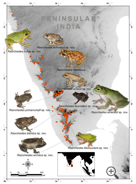 Nine new species of bush frogs (Source: Zootaxa journal)