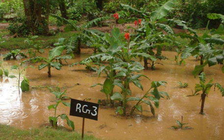 Rain garden created by the National Gephysical Research Institute in its campus has resulted in zero runoff from the three ha campus. Water table in the area has risen by 1.5 metre (Source: National Gephysical Research Institute)