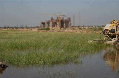 NGT order clears way for Nirma cement plant at cost of wetland