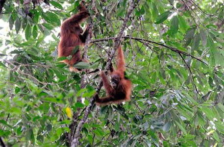 Tourism to fight deforestation