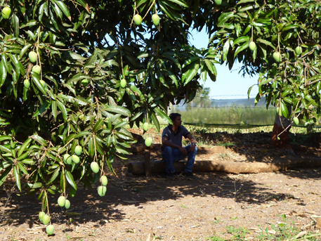 Sukhdev Singh, a young engineer who acted as my interpreter, says his mango orchard is the best place to relax and watch children play as a cool breeze blows. He does not want to lose any of it to a nuclear power plant