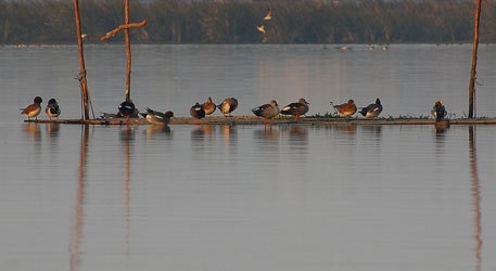 Okhla bird sanctuary in danger