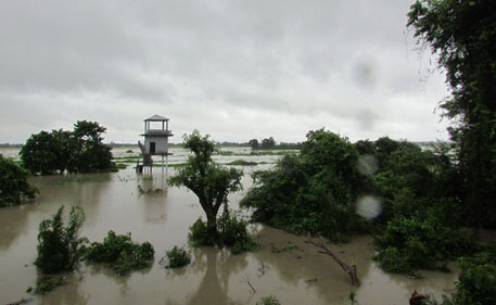 Flood water inundates Kaziranga (Photo Credit: Rathin Barman)