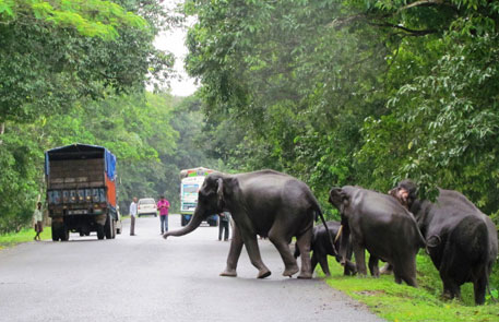 Flooding has pushed wild animals out of Kaziranga, exposing them to the dangers of traffic and poachers (Photo Credit: Rathin Barman/IFAW-WTI)
