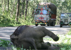 Environment ministry wants to restore night traffic through Bandipur tiger reserve