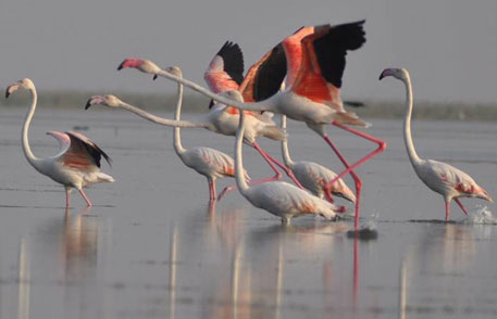 Maharashtra to propose five wetland sites for recognition as Ramsar sites