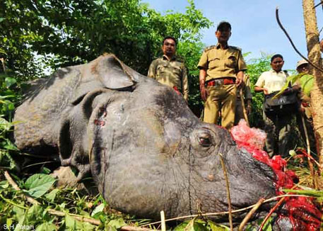 Militants poaching rhinos in Kaziranga