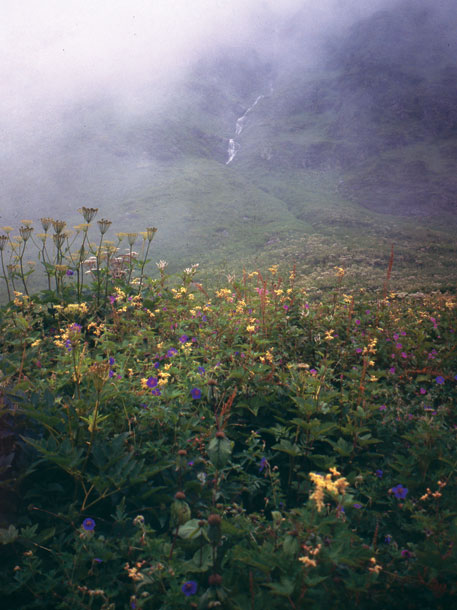 A view of the valley in 1998. It has over 500 flowering plants