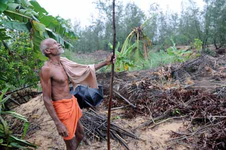 Some betel vine gardens uprooted during land acquisition have been regrown by residents (Photo by Sayantan Bera)