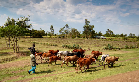 Health of humans, livestock interlinked in Africa