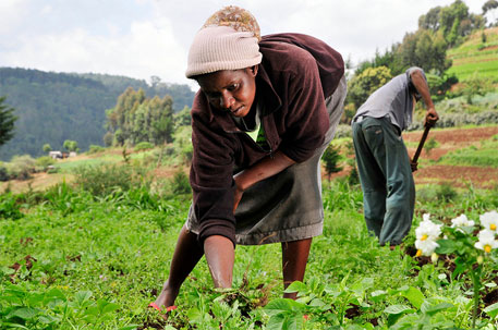Africa aims to end hunger by 2025; FAO for curbing food imports