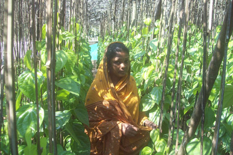 Sabita, wife of Tapan Mandal who was killed during anti-POSCO protests in 2008, has rebuilt their betel vineyard to provide for her children