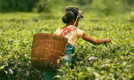 Assam budget announces measures for small tea growers