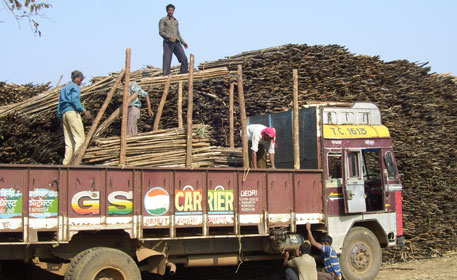 Bamboo rights: Maharashtra gives priority to paper mill over Forest Rights Act