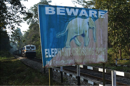Underpass for elephants? Supreme Court snubs solicitor general
