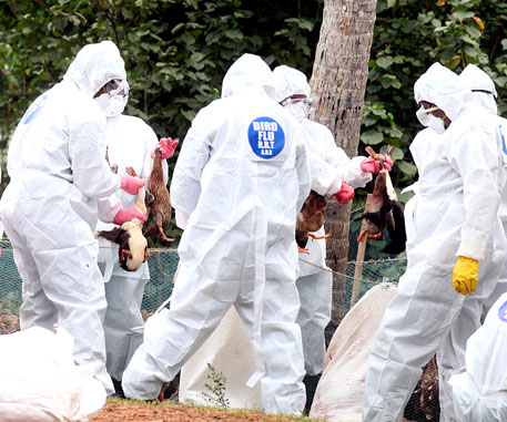Bird flu in Kerala under control, say authorities
