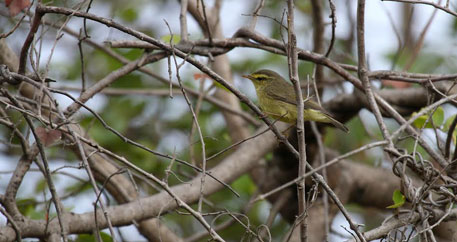Nagpur has 200 bird species, reveals bird-spotting exercise