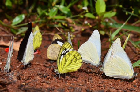 Kerala's Periyar Tiger Reserve is a butterfly hot spot, finds survey