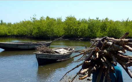 Economic potential of carbon-rich mangroves untapped: report