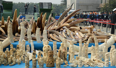 Demand in Asia is fuelling poaching in Africa (Source: CITES)