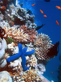 Warming damaging coral reefs of small island nations: UNEP