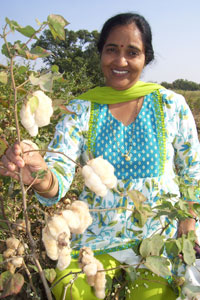 'I have lint from this variety grown as far back as 2007, and it has not faded at all,' says Vinita Gotmare, senior scientist with CICR, who has developed the variety