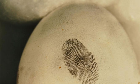Forensics breakthrough in wildlife crime research