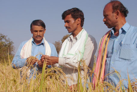 The MSP for common grade paddy has been increased by Rs 170 per quintal