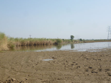 Effuent from the industries is stored in an open pond, which has destroyed neighbouring farms. The land has been rendered unfit for cultivation or any other activity